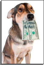 A dog with cash